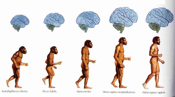 L'evoluzione dell'homo sapiens.